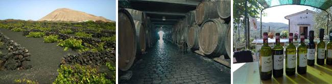 Tenerife wine tasting