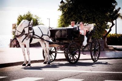tenerife-horse-transfer